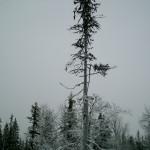 Lapland_4
