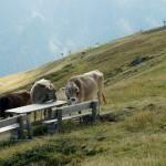 Mayrhofen-14