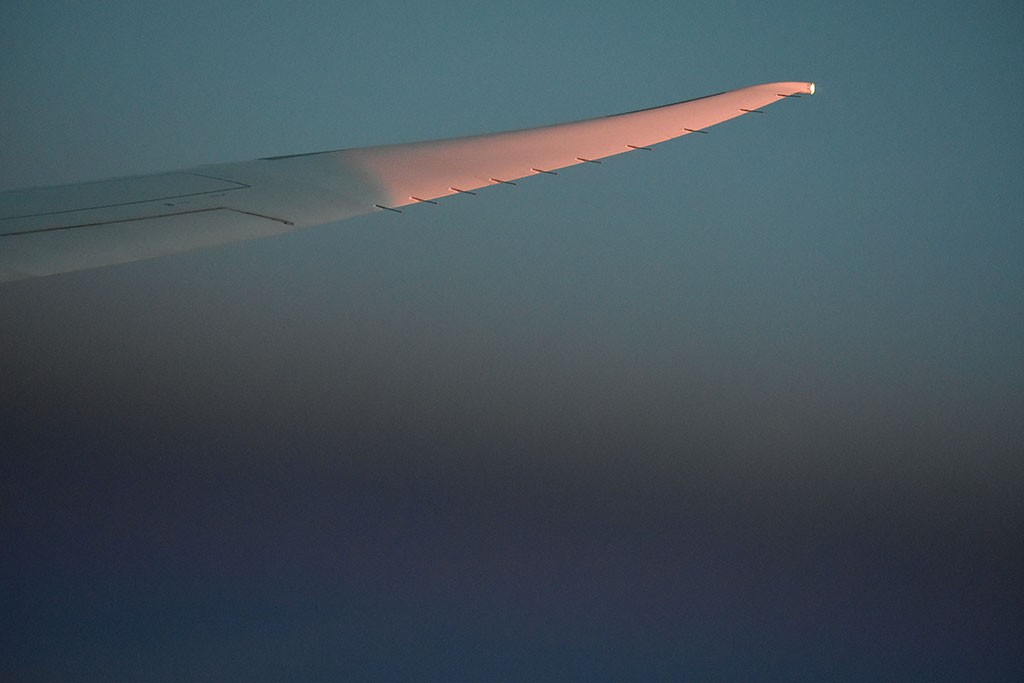 Fly in the evening