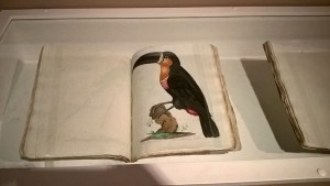"""The Natural History of Birds"". 1790-1792"